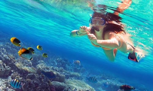 Descubre el mundo Snorkel